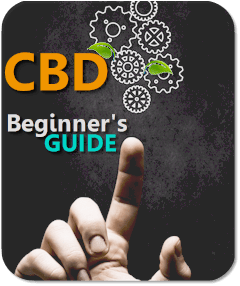 beginners guide to cbd online