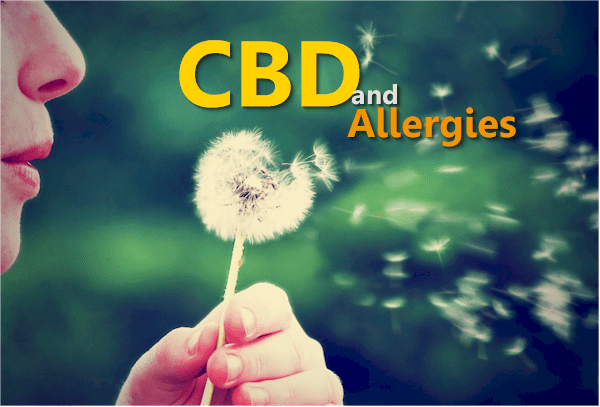 How does CBD work for allergies and histamines
